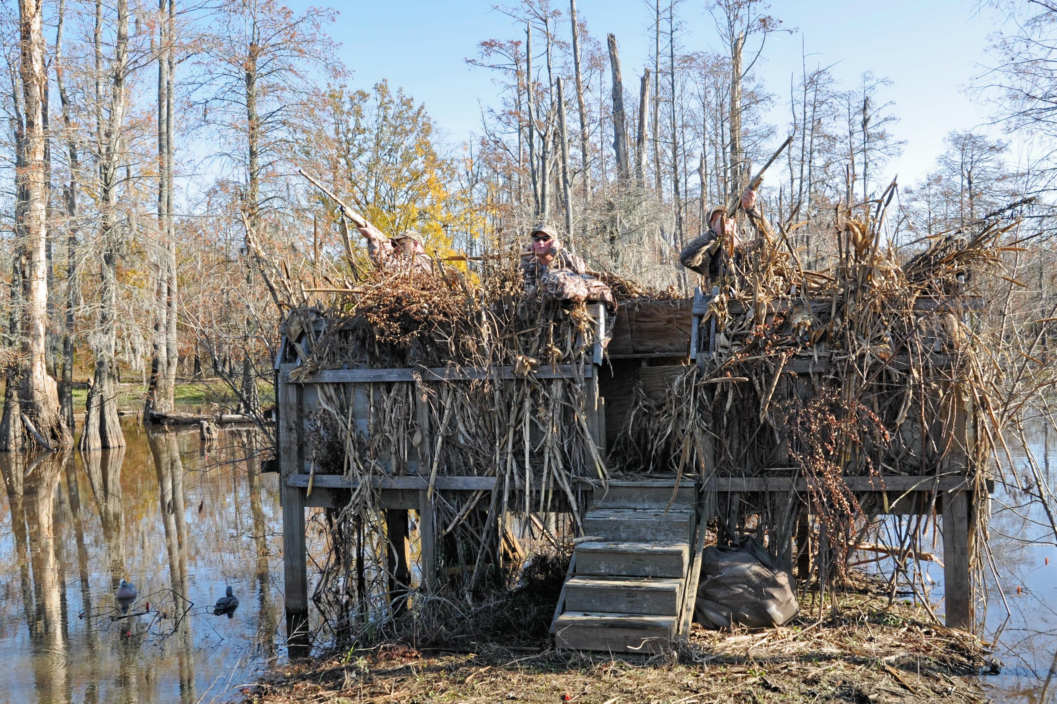 Go Quackers Over North Carolina Wood Ducks