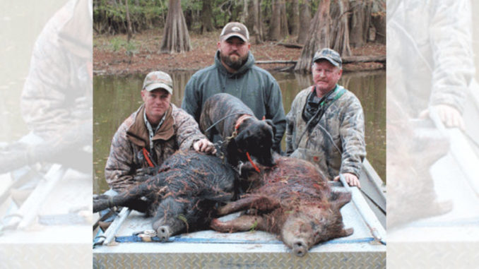 hogs with dogs