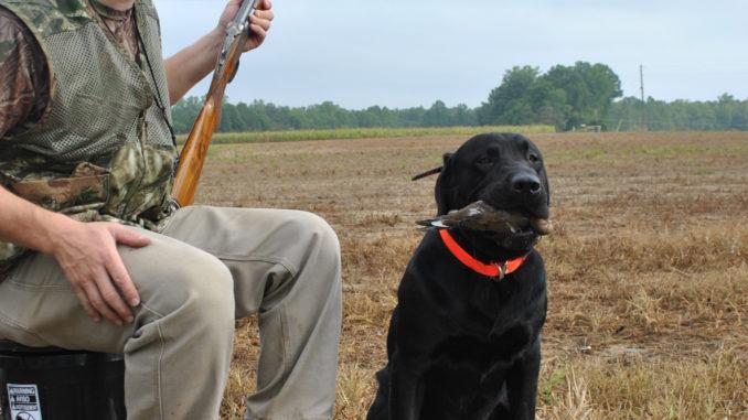 Where are North Carolina's best public dove fields?