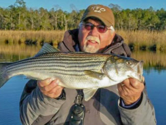 New Bern stripers: a bridge that's not too far