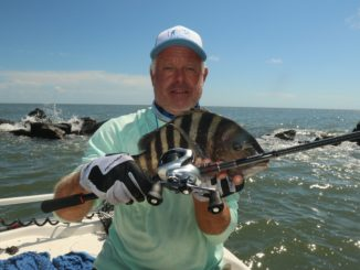 Sheepshead fill up jetties at Little River