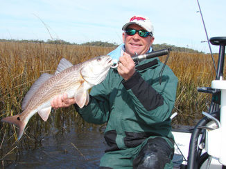 Warm, shallow waters in three bays between Fort Fisher and Bald Head Island are popular winter spots for redfish.