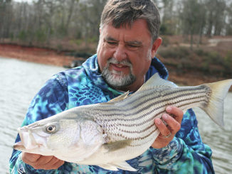 Guide Chip Hamilton looks for Lake Hartwell's striped bass this month in the upper end of the lake.