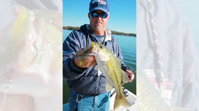 Lake Russell spits out plenty of nice spotted bass, even during the winter.