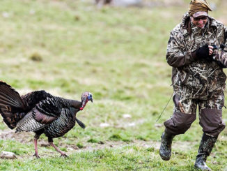 This aggressive turkey was a nuisance to one photographer, but a source of laughter for another.