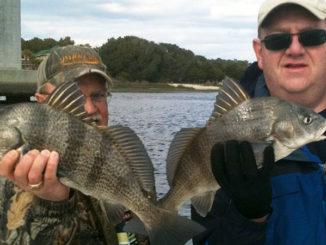 Black drum will wake up early in the year and stage on structure in deeper holes in Little River's estuary.
