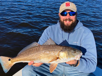 Red drum are on the move in March as big ocean schools start to break into smaller groups and head inshore.