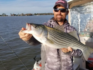 Anglers are catching schooling stripers at Santee