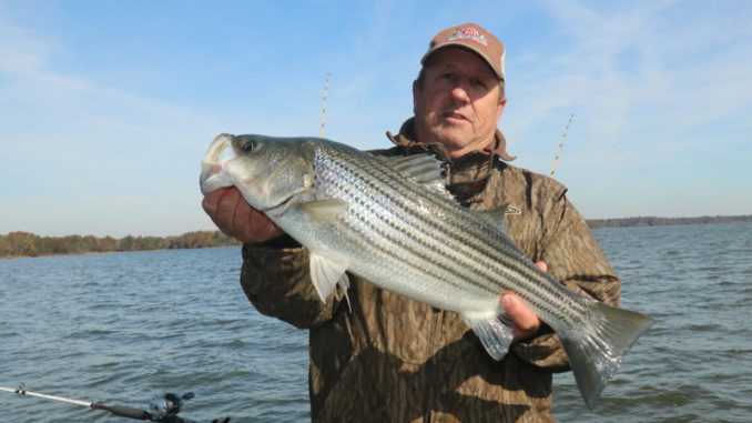 New waters closed to N C  striped bass harvest - Carolina