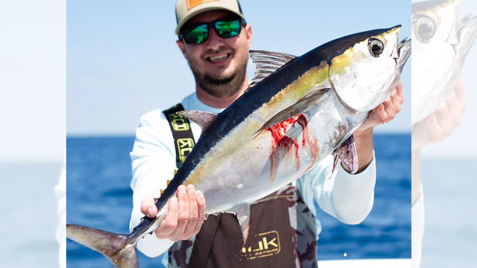 Blackfin tuna are an early season favorite for South Carolina bluewater fishermen along the Grand Strand.