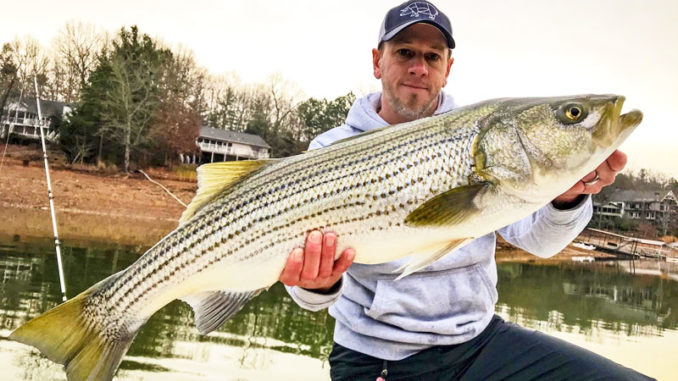 Guide Shane Goebel caught this 34-pound striper from North Carolina's Hiwassee Lake, which has been stocked for only a handful of years.