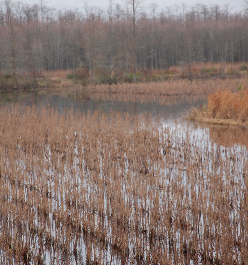 Good soils, good drainage and available water are concerns involved in choosing a waterfowl impoundment site.