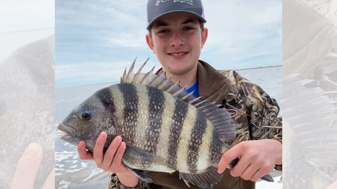Sheepshead flock to the rock jetties that line the mouth of Winyah Bay.