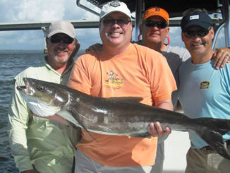 Cobia will hang around bridges over bodies of water in the Lowcountry, often cruising at or just below the surface.