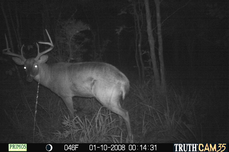 After seeing the red lights from the author's older camera, this buck was never filmed again.