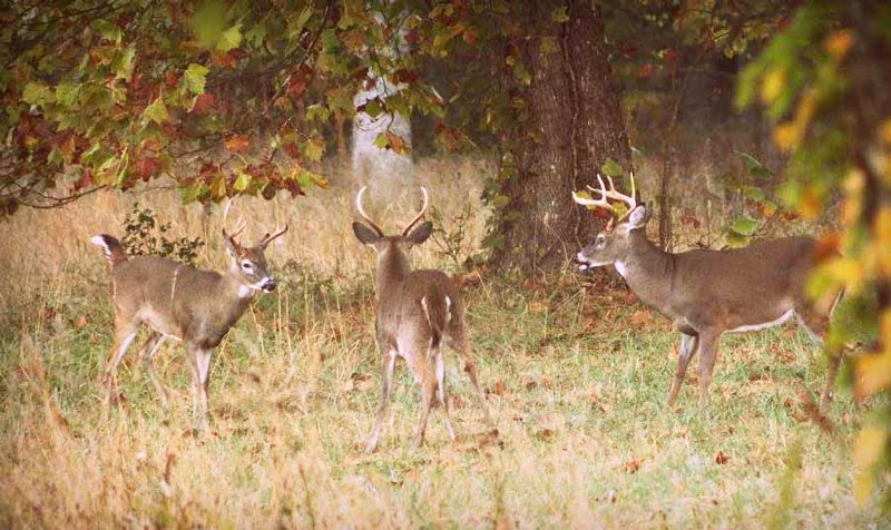 One good mineral site per 100 acres of land is recommended to provide deer with the calcium and phosphorous they will utilize through the summer, when antler production is at its peak.