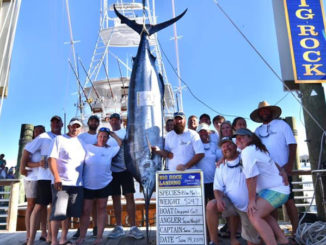 524-pound blue marlin