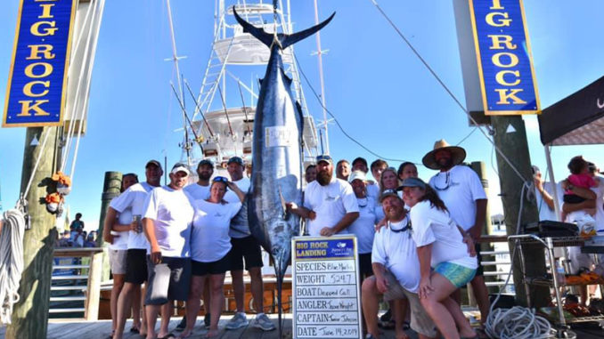 524-pound blue marlin