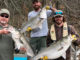 Lake Hartwell Stripers