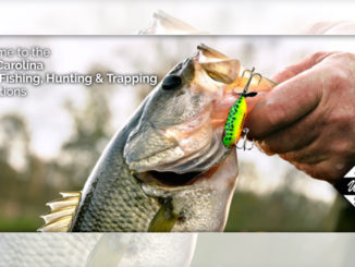 Striped bass season closing Monday in many N C  waters