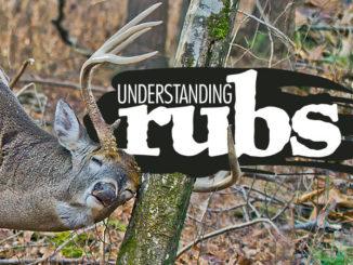 Understand why, where bucks rub their antlers