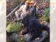 Upstate Bear Hunt