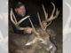 Buncombe County buck