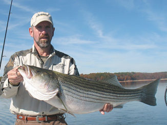 February striped bass