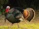 turkey seminars