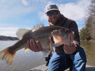 10-pound bass