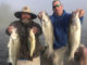 Wateree River stripers