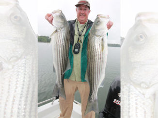 Hartwell stripers
