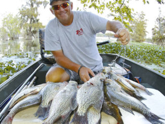 Grass means crappie in Santee's summer swamps