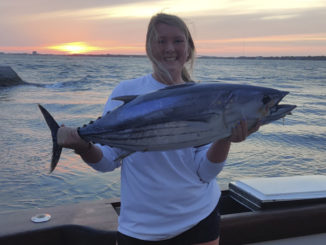 skipjack tuna