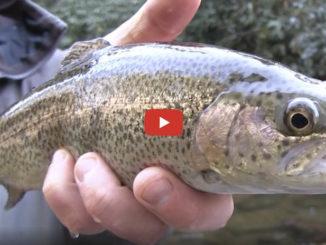 Upstate trout fishing