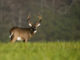 deer tags
