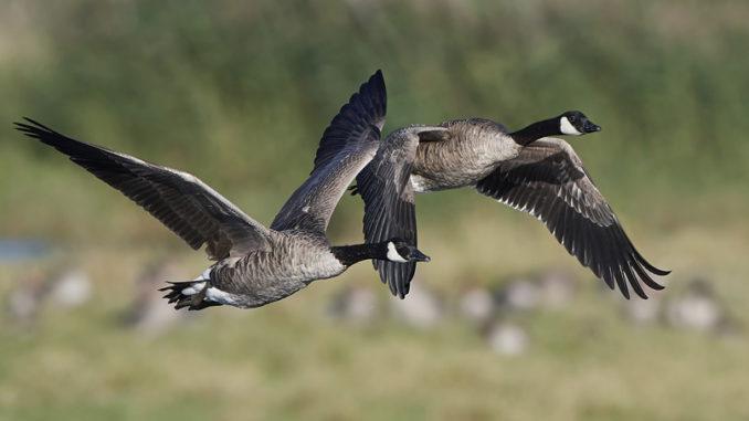 migratory bird season
