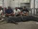trophy gator