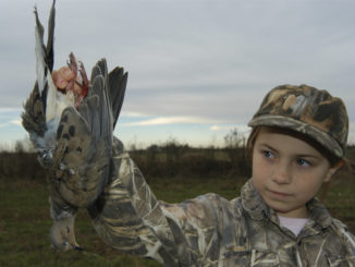 youth-only dove hunt