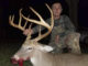 Stanly County 9-point buck