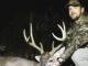 Edgecombe County buck