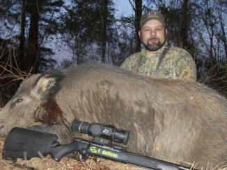 trophy-sized hogs