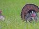 turkey hunting seminars