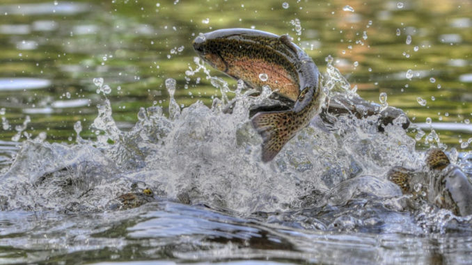 trout waters
