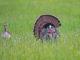 women's turkey hunting