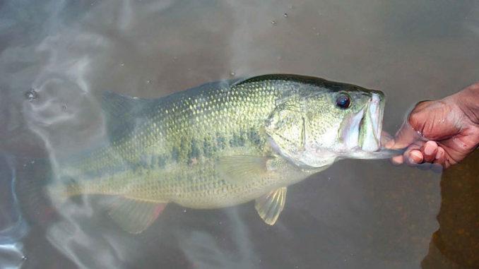 prespawn bass