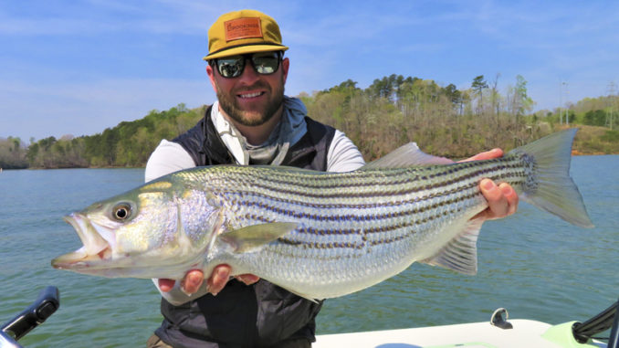 stripers