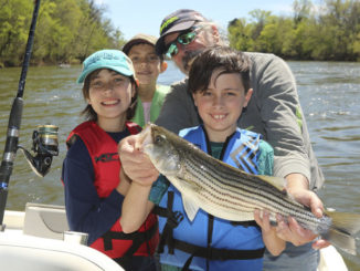 Roanoke River striper