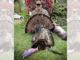22-pound gobbler