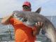 45-pound blue catfish